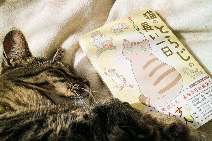 キジトラ猫と本