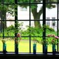 癒しの窓辺