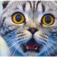 猫のてんかん発作|前兆や症状など調べてみた