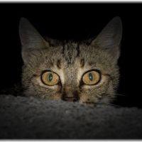 【眠れない】猫の夜中朝方の鳴き声がうるさいときの4つの対策