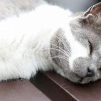 【熱中症対策】猫にエアコンは必要?冷房とドライどっちを使う?