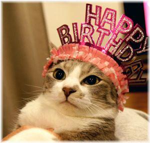 【見分け方】猫の年齢をリアルに人間に換算してみた