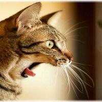 【注意】部屋飼いの猫のストレスを軽減する4つの方法