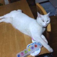 【熱中症】猫が夏の暑さで息が荒いときはアイスノン!