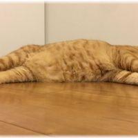 【食欲不振】猫が夏バテ症状で困ったときの4つ予防法と対処法