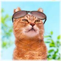 【エアコンなし】猫が真夏にお留守番!暑さ対策3グッズ