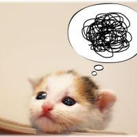 【大好き】猫は飼い主をどのように見ているの?【ツンデレ】