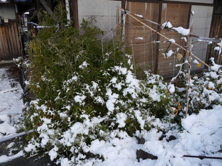 20170115雪