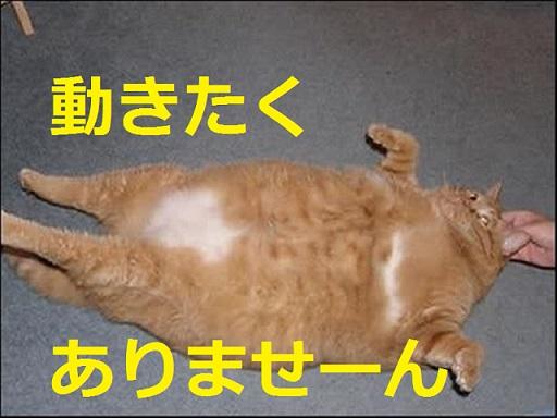 2015_04_24_デブ猫-動きたくありません
