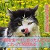 母猫が子猫を食べる理由を徹底解明!!動物の母親すべてに当てはまる意外な本能について