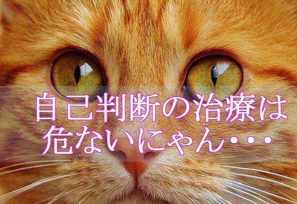 猫-風邪-自己判断による治療は危険