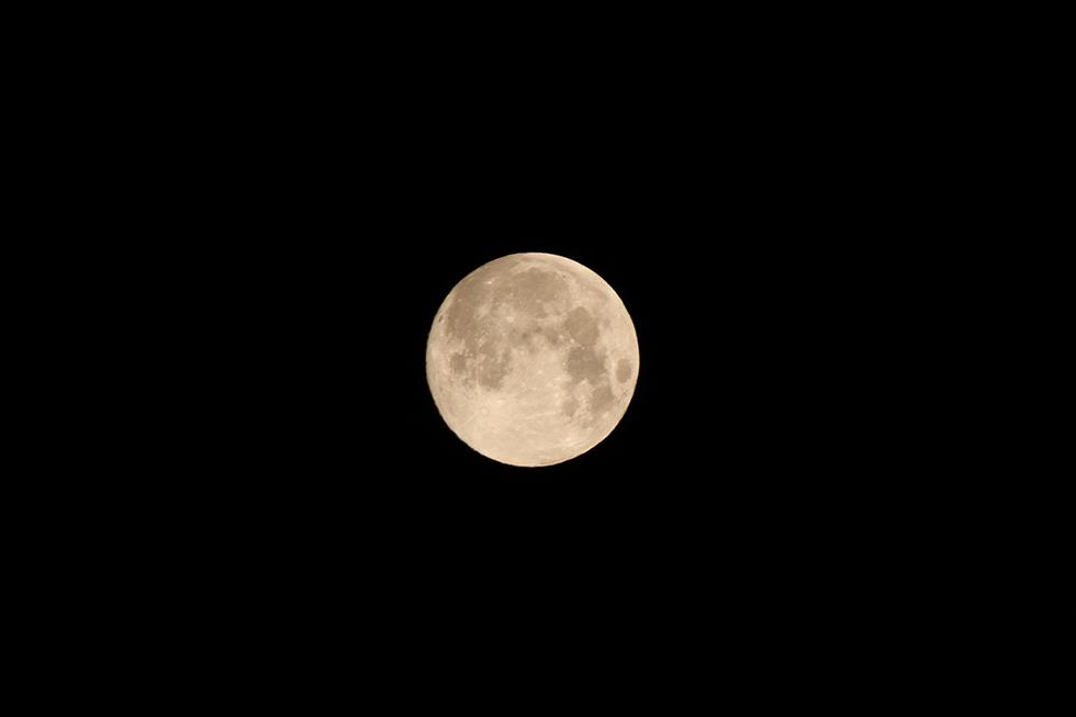 中秋の名月-ネコ以外を撮るのは久しぶり