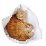 猫の採尿方法 〜持っていくまでの時間、取り扱いなど〜