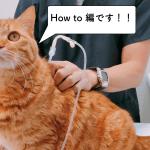 獣医師が教える猫の皮下点滴の必勝法