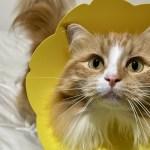 猫専門病院が実際に使っているエリザベスカラーおすすめ5つ