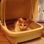 猫とトイレ〜猫にとって好ましいトイレの8個のポイント〜