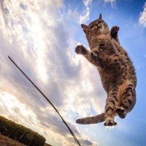 人気度の跳躍も止まらない!話題の飛び猫を徹底調査!