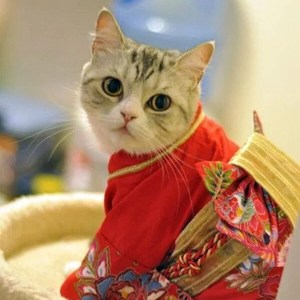 モデル顔負け!猫コスプレで決めポーズ♡