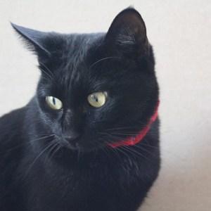 黒猫好き必見!美しい黒猫と遊べる「黒猫カフェ」があるらしい