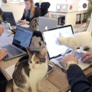 就職したい!猫に囲まれて働ける、夢のようなオフィスが話題