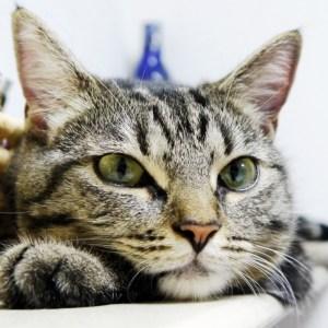 猫を愛してやまないあなたのために♪猫のしぐさからわかる猫の気持ち