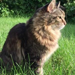 【え!?信じられない!!】世界一の王座に輝く猫たち