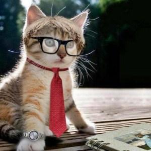働く猫:社会貢献している猫を集めてみました。