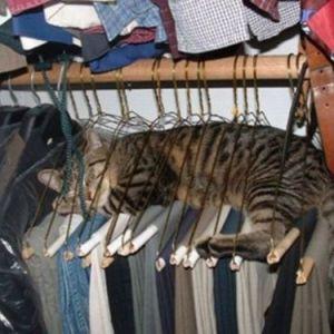 「そんなところで寝ちゃう!?」どう見ても寝る場所を間違えている猫たち