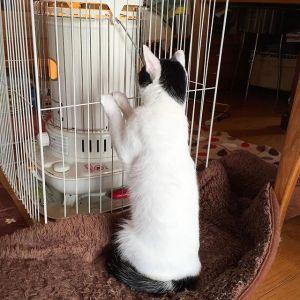 猫は、ありとあらゆるもので「暖を取る」動物である。