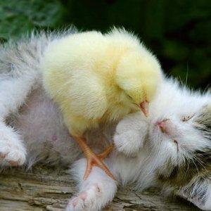 友達たくさん出来るかな?色んな動物と戯れる猫にほっこり♪