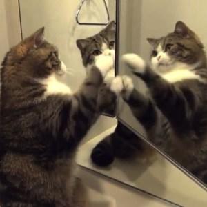 猫に鏡を見せてみたら……。リアクションが面白い、画像・映像まとめ!