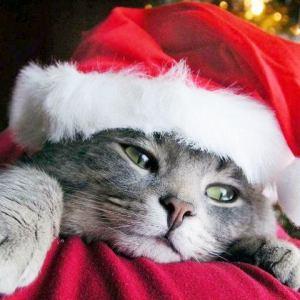 クリスマスは猫モチーフのお酒と愛猫でかんぱーい♡