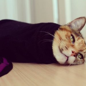 【そでねこ】ママの服の袖に潜り込んでまたーり!寛ぐ猫ちゃん達がめちゃカワ♪