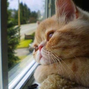 【年末年始】猫に留守番をさせる時に気をつける事とは?