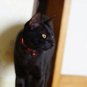 【春休みはここで決まり!】伊豆に猫と過ごせる温泉民宿があった!