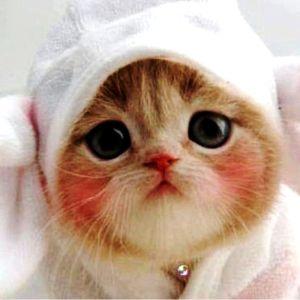【Happy Valentine's Day】猫好き男子に贈る♡可愛い猫画像
