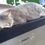 ただそこに居るだけでも可愛い存在(・∀・)自走改札機の上で寝る猫(=_=)