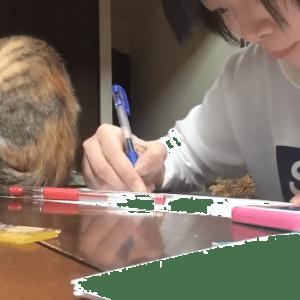 こんな猫に邪魔されるなら勉強できなくてもいい?勉強を必死で邪魔する猫が可愛すぎ(*´艸`*)