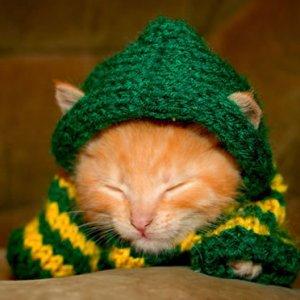服を着た猫たちが可愛いすぎ(*´ω`*)猫のコスプレ特集♪