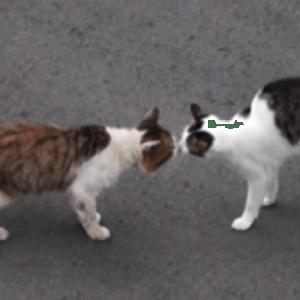 いじめを受け引きこもっていた猫…その後初めてお友達を作った瞬間に感動!( ;∀;)