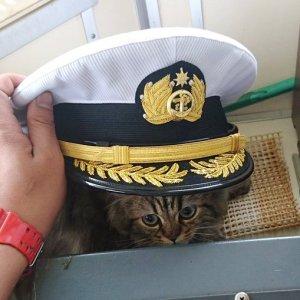 【話題の猫船長】可愛過ぎるカンパチ船長から目が離せない♪