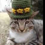 手作りの毛糸帽子で可愛さ200%!おしゃれなネコのイケてる冬支度♪