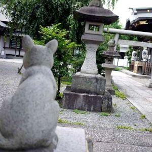 【猫返し神社】家出した猫ちゃんが帰ってくると言う不思議な神社にお参りしてみませんか?!