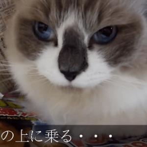 【猫あるある】猫がよくする行動をまとめてみた♪
