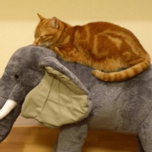 この場所がお気に入り♪巨大なゾウのぬいぐるみに乗るネコの姿が何かシュールwww