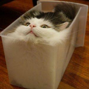究極の癒し♡自分にとって最高のフィット感を求め探求する愛猫。その結果、私たちに至福の時をプレゼントしてくれた…