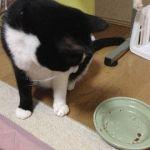 今日の猫缶『金缶ささみ 削りぶし入りささみ』