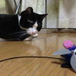 今日の猫缶『CIAO とろみ 焼かつお ささみ カツオ節入り』