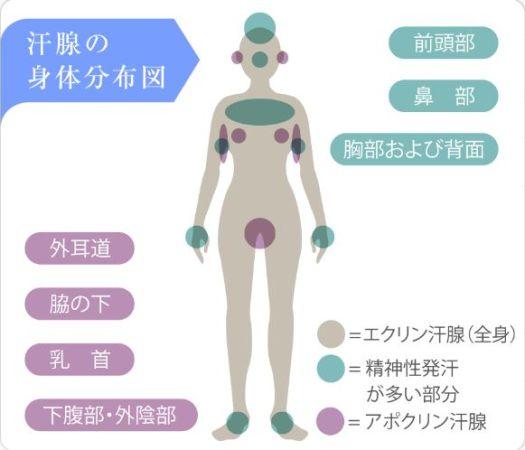 汗腺の身体分布図