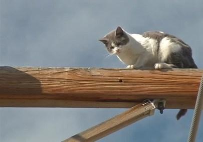 猫を救出。